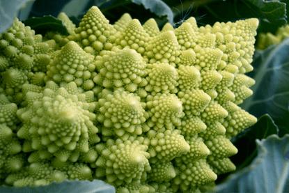 Resultado de imagen de cultivo romanesco